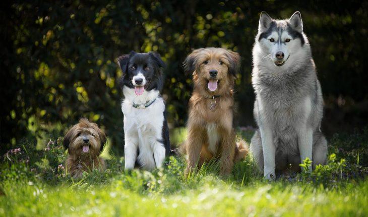 nosówka u psa